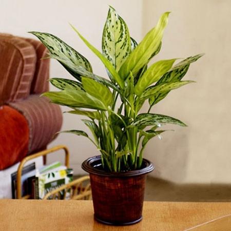 Trang trí cây xanh trong nhà và những điều cần lưu ý
